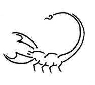 Sternzeichen Skorpion Datum