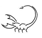 skorpion liebe