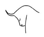 Horoskop Stier Partnersuche